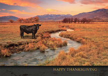 Western Front Thanksgiving Cards